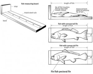 p42 Are you correctly measuring your catch? FISH (see page 42)
