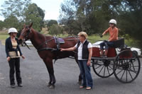 june_08_photos_kindy_horse_and_cart_visit